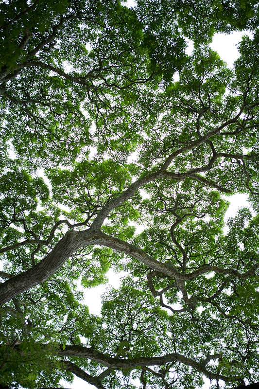 http://www.westoncolton.com/files/gimgs/23_wctree-canopy0965-800px.jpg